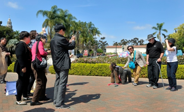 Another beautiful San Diego Sunday afternoon. Tourists photograph concert regulars  Taylor, Katy and Ryder, the sunglassed and sunshaded poodles.